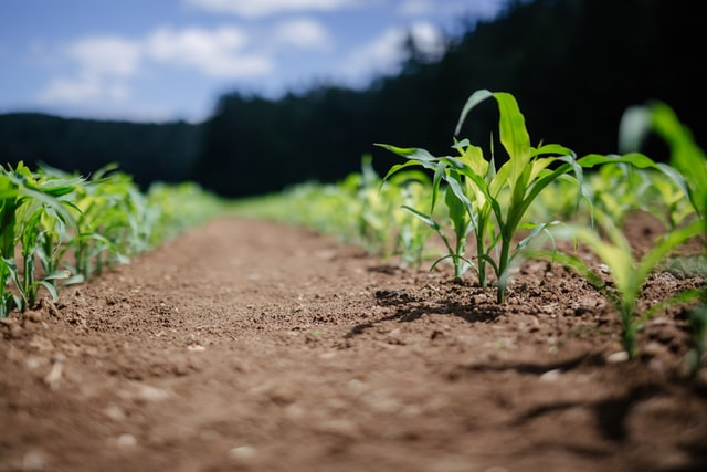 Rodzaje środków ochrony roślin stosowanych w uprawach