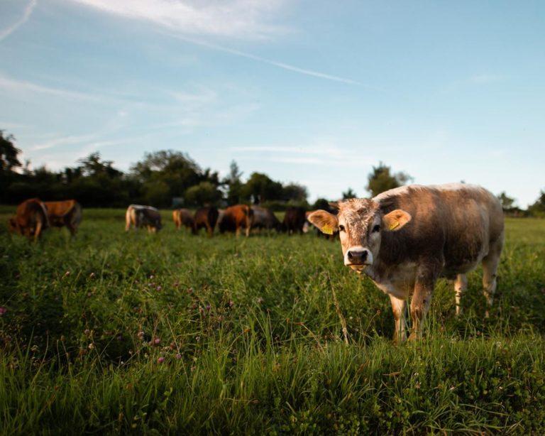 Firmy oferujące wsparcie technologiczne rolnictwa – co mogą zaoferować?