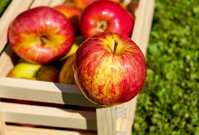 Wykorzystanie warzyw i przechowywanie warzyw